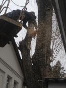 Резка деревьев кронированние Киев