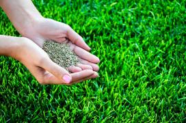 Seeding lawn grass, lawn, lawn care services